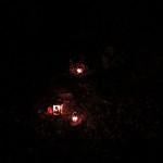 """""""Piwnica Młynkowska"""" - miejsce pochówku 11 zakładników rozstrzelanych 14 listopada 1943 roku przez Niemców""""Piwnica Młynkowska"""" - miejsce pochówku 11 zakładników rozstrzelanych 14 listopada 1943 roku przez Niemców"""