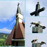 Bociany na kościele w Kasinie Wielkiej - Kaplica Na Brzegu